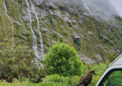 2_Neuseeland_Fjordland Nationalpark