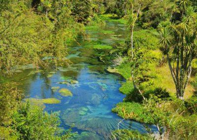 4_Neuseeland_Blue Spring Putaruru